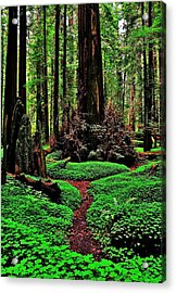 Redwoods Wonderland Acrylic Print by Benjamin Yeager