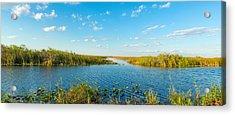 Reed At Riverside, Big Cypress Swamp Acrylic Print