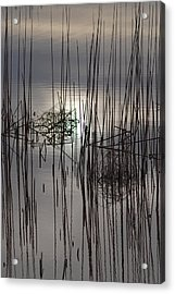 Reed Reflection 3 Acrylic Print by T C Brown
