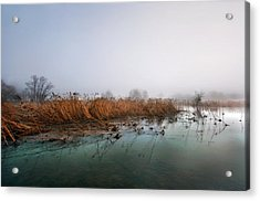 Acrylic Print featuring the photograph Reeds by Graham Hawcroft pixsellpix