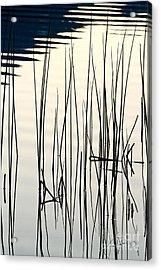 Reeds II Acrylic Print