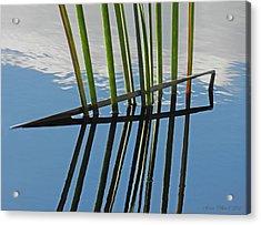 Reeds In Wetlands Acrylic Print