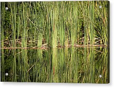 Reeds Of Reflection Acrylic Print