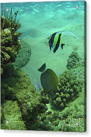 Acrylic Print featuring the photograph Reef Life by Suzette Kallen