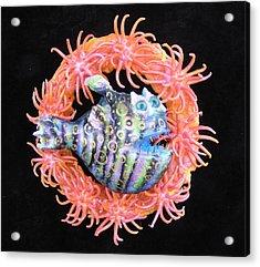 Reef Magic Acrylic Print by Dan Townsend
