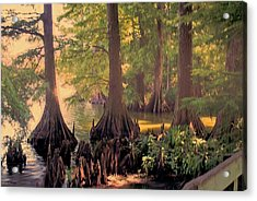 Reelfoot Lake At Sunset Acrylic Print