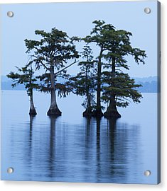 Reelfoot Lake Acrylic Print by Eric Foltz