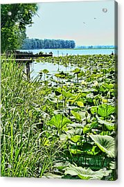Reelfoot Lake Lilly Pads Acrylic Print