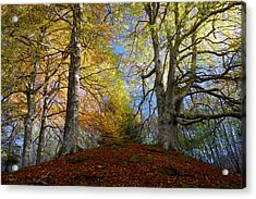 Reelig Forest  Acrylic Print