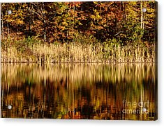 Refections In Water Acrylic Print by Dan Friend