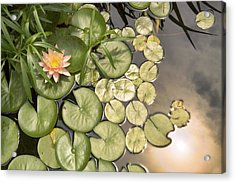 Reflected Light Upon Flowering Water Lilies Acrylic Print