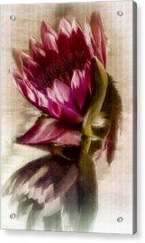 Reflected Waterlily Acrylic Print by Jill Balsam