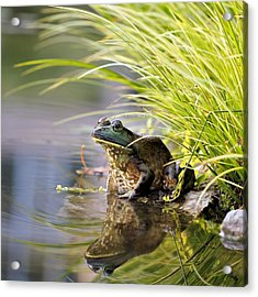 Reflecting Acrylic Print by Katherine White
