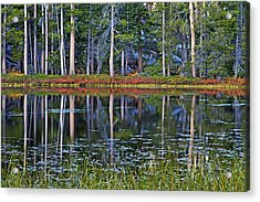 Reflecting Nature Acrylic Print