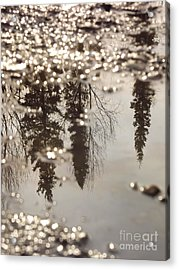 Reflection Acrylic Print by Jennifer Kimberly