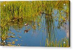 Reflection Of A Bird On Water, Boynton Acrylic Print