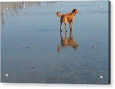 Reflection Of Rusty Acrylic Print by Mark Barclay