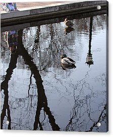 Reflection Of The Watcher Acrylic Print by Jack Adams