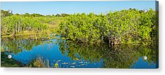 Reflection Of Trees In A Lake, Anhinga Acrylic Print