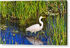 Reflection Of White Crane In Pond Acrylic Print