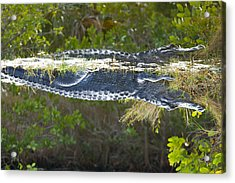 Reflection Acrylic Print by Wild Expressions Photography