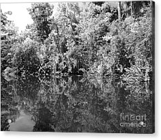 Reflections Acrylic Print by Carey Chen