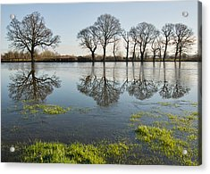 Reflections In Flood Water Acrylic Print