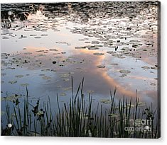 Reflections Acrylic Print by Michael Krek