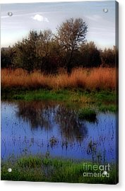 Reflections Acrylic Print by Molly McPherson
