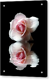 Reflections Of A Rose Acrylic Print
