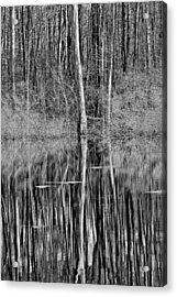 Reflections Of A Swamp Acrylic Print