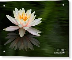 Reflections Of A Water Lily Acrylic Print