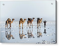 Reflections Of An Ancient Life Acrylic Print