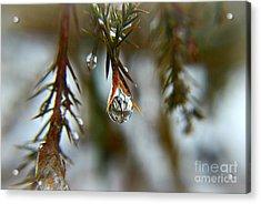 Reflections Of Beauty Acrylic Print