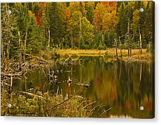 Reflections Of The Fall Acrylic Print