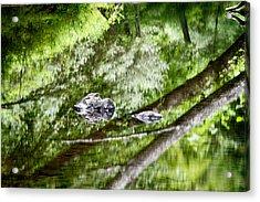 Reflections Of Van Campens Glen Acrylic Print
