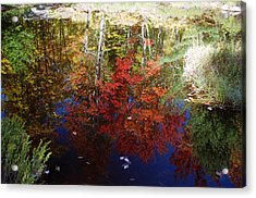 Acrylic Print featuring the photograph Reflections On Algonquin by David Porteus