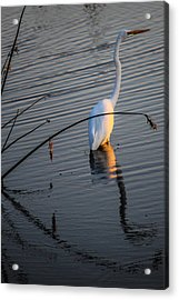 Reflections One Acrylic Print by Lesley Brindley