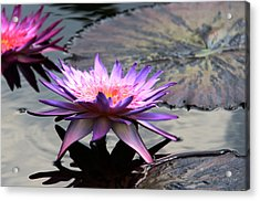 Dark Water Reflections Acrylic Print by Yvonne Wright