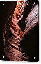 Reflective Antelope Acrylic Print