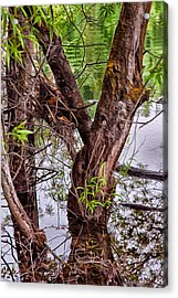 Reflective Trees In A Lake Acrylic Print by Omaste Witkowski