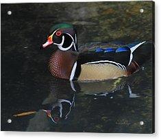 Reflective Wood Duck Acrylic Print by Deborah Benoit