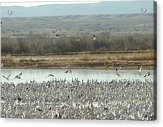 Refuge View  Acrylic Print