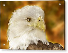 Acrylic Print featuring the photograph Regal Eagle  by Brian Cross