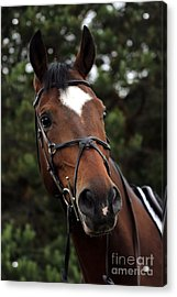 Regal Horse Acrylic Print