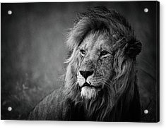 Regal Acrylic Print by Mohammed Alnaser