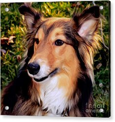 Dog - Collie - Regal Shelter Dog Acrylic Print by Luther Fine Art