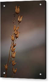 #reggiemiller Acrylic Print by Becky Furgason