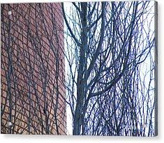 Regular Irregularity  Acrylic Print by Brian Boyle