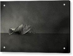 Reincarnate Acrylic Print by Mark  Ross